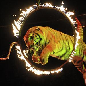 Цирки Аши