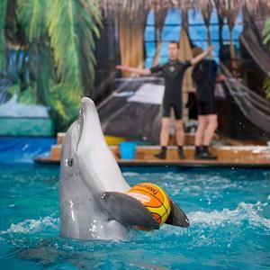 Дельфинарии, океанариумы Аши