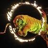 Цирки в Аше