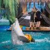 Дельфинарии, океанариумы в Аше