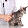Ветеринарные клиники в Аше
